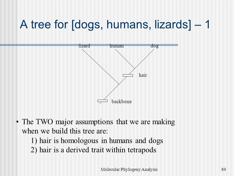 A tree for [dogs, humans, lizards] – 1